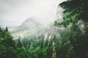 forest-landscape-hiking-mountains